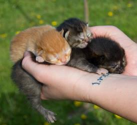 Fist Full of Kitten by Phoenix-Cry