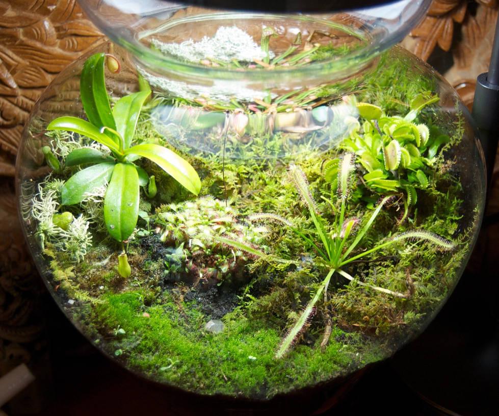 Carnivorous Plant Terrarium By Phoenix Cry On Deviantart