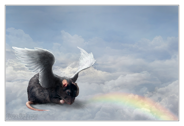 Over the Rainbow Bridge by Le-Rapps | Rats Love Rainbows | Pinterest