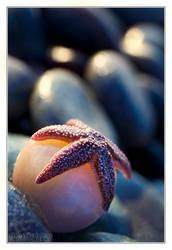 Starfish 1 by DianePhotos