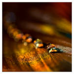 Pure gold by DianePhotos