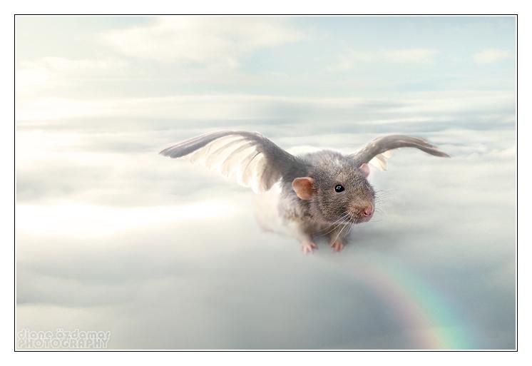 Thor on the Rainbow Bridge by DianePhotos