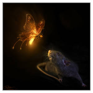 I wish upon a firefly...