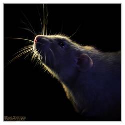 Aegir 13 - Fancy rat