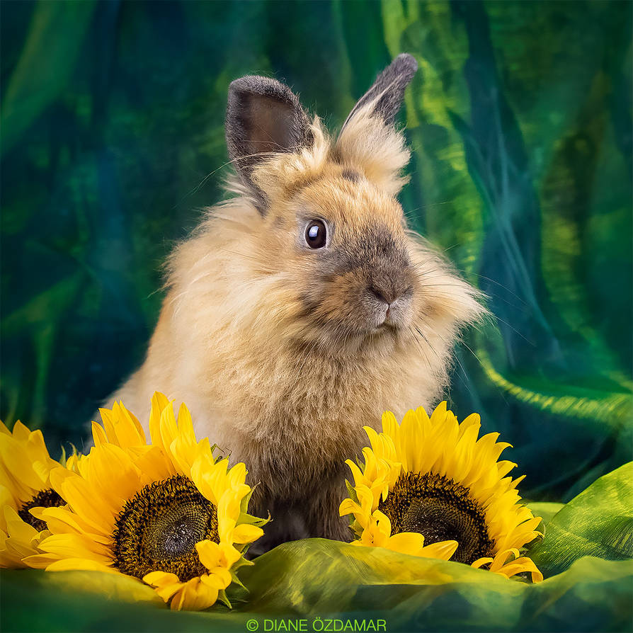 Rose - rescue rabbit by DianePhotos