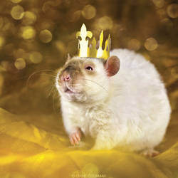 King Lorich - Fancy Rat by DianePhotos