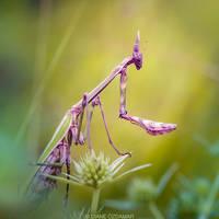 Alien Queen by DianePhotos