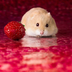 Strawberry world by DianePhotos