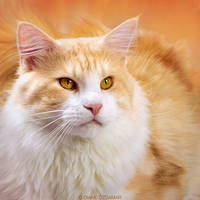 Amber eyes by DianePhotos