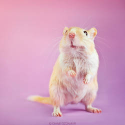 The gerbil that wanted to be a T-Rex