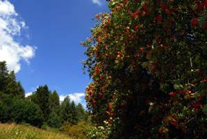 berries by baerin