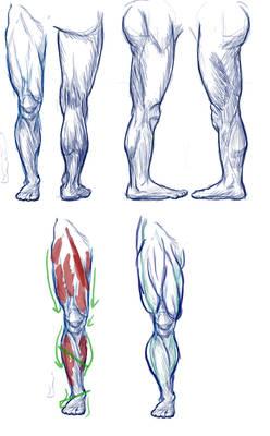 Legs - studies
