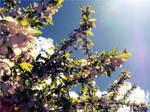 Sunning by Chikizzo