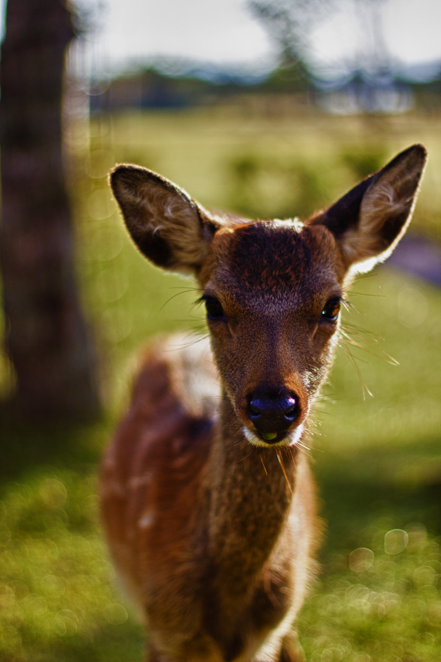 miyajima deer by Obsidian-Eyes