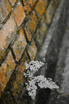 walls of life by Calisto-Melancton
