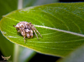 Macro Photography by lee-sutil