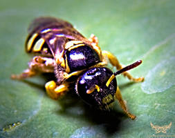 Macro Photography 101 by lee-sutil