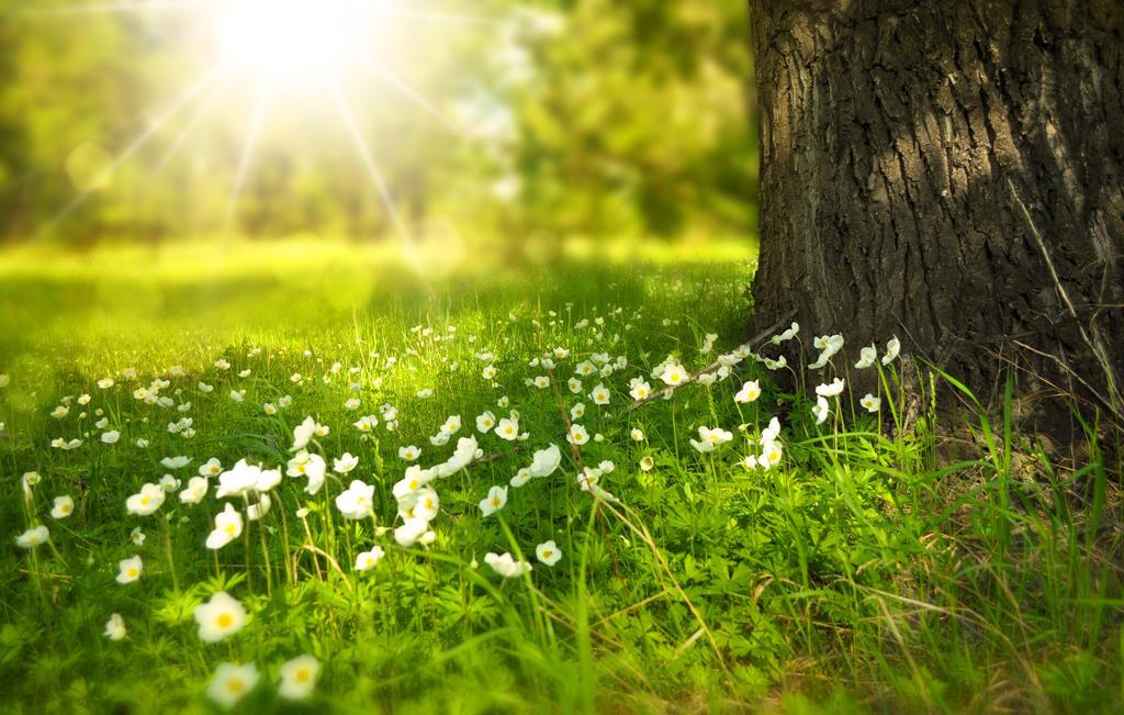 Spring-5423876 by bestoffers