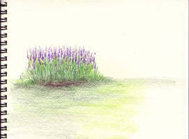 Lavender colored pencil