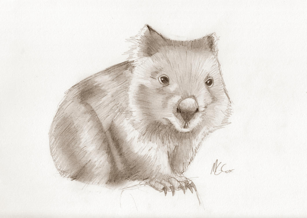 Wombat Drawing Wombat sketch by Goggl...