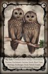 UTRL - The Owls