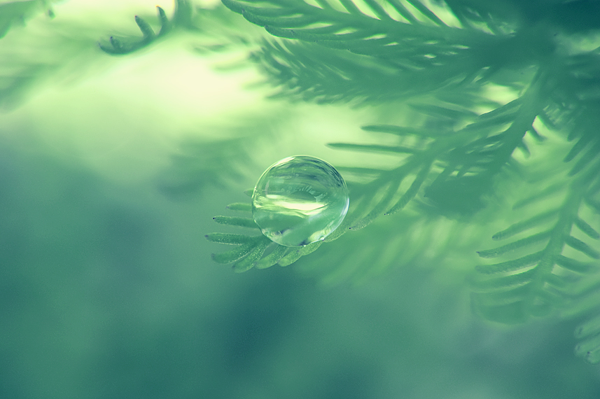Pond Life by o-kaykay