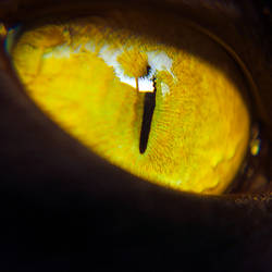 Cats Eye by o-kaykay