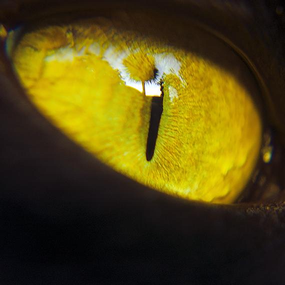 Cats Eye by KayHulbert