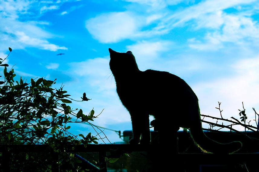 Bird Watching by o-kaykay