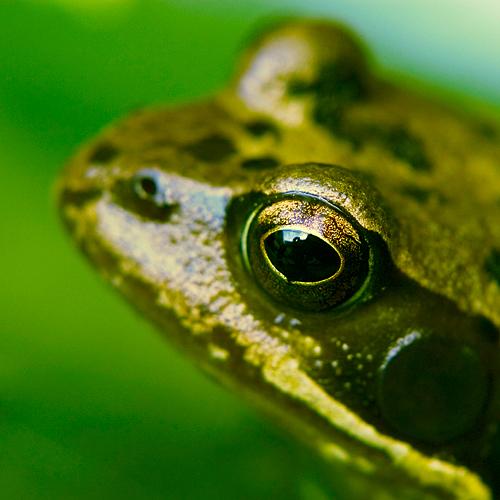 The Frog Prince by o-kaykay