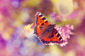 Delicate Beauty by o-kaykay