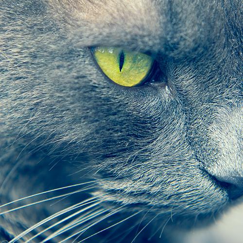 Here Kitty by o-kaykay