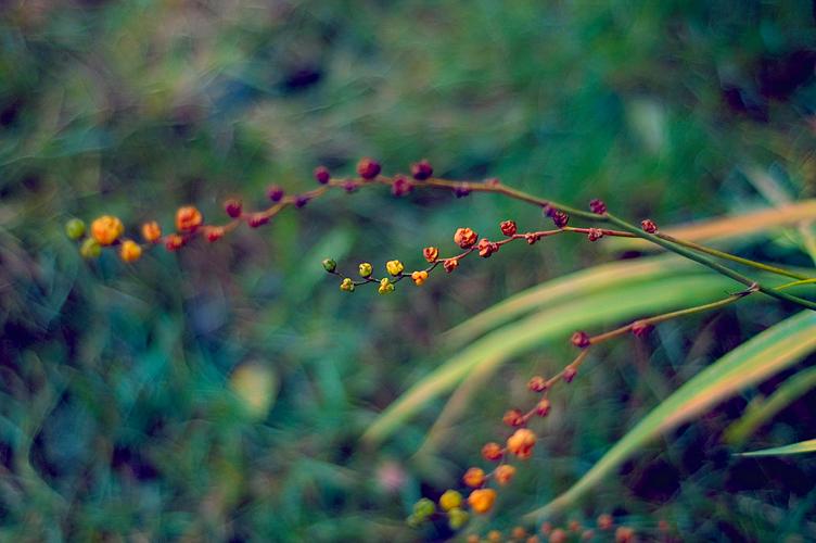 Veins by KayHulbert