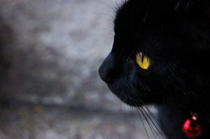 Le Chat Noir by o-kaykay