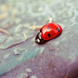 Ladybird by o-kaykay