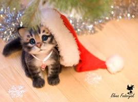 little kitten Nusha by KittenBlackUA