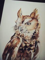 owl by ellesiren