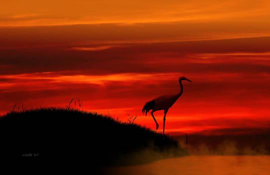 Red Crown Crane