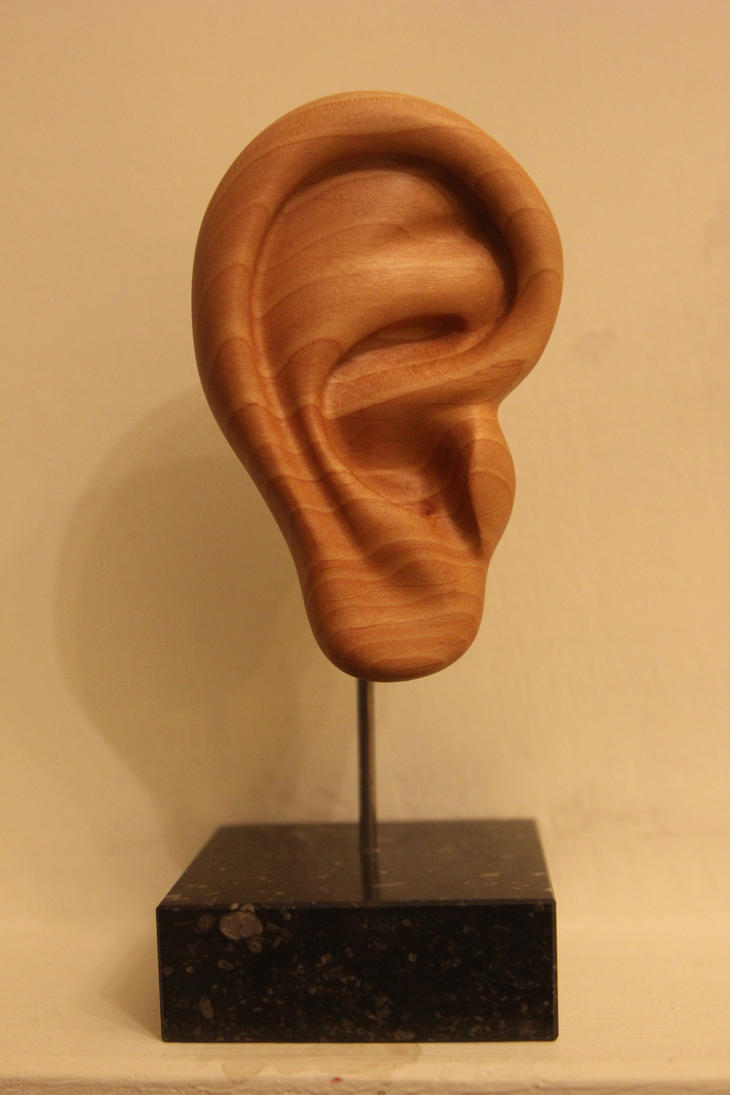 Ear in wood by HairyHippo