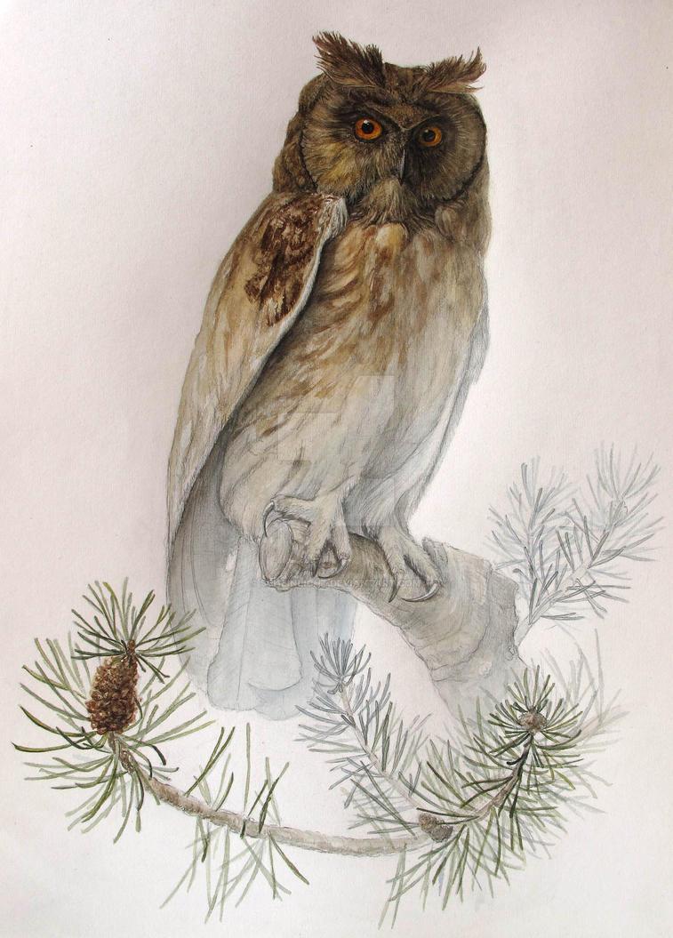Owl by Scheinlicht