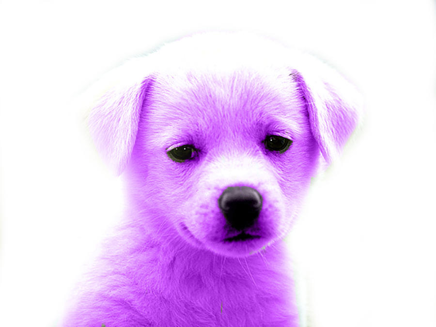 purple puppy by katpann on DeviantArt Really Cute Baby Animals Pictures