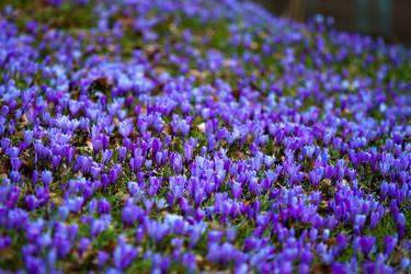 FlowerPower by saeppo