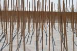 Sand stick by saeppo