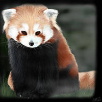 Red Panda by cristy201