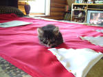 Little sewing assistant