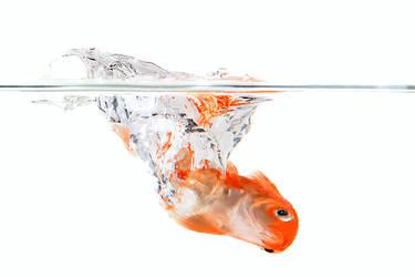 Goldfish by amai911