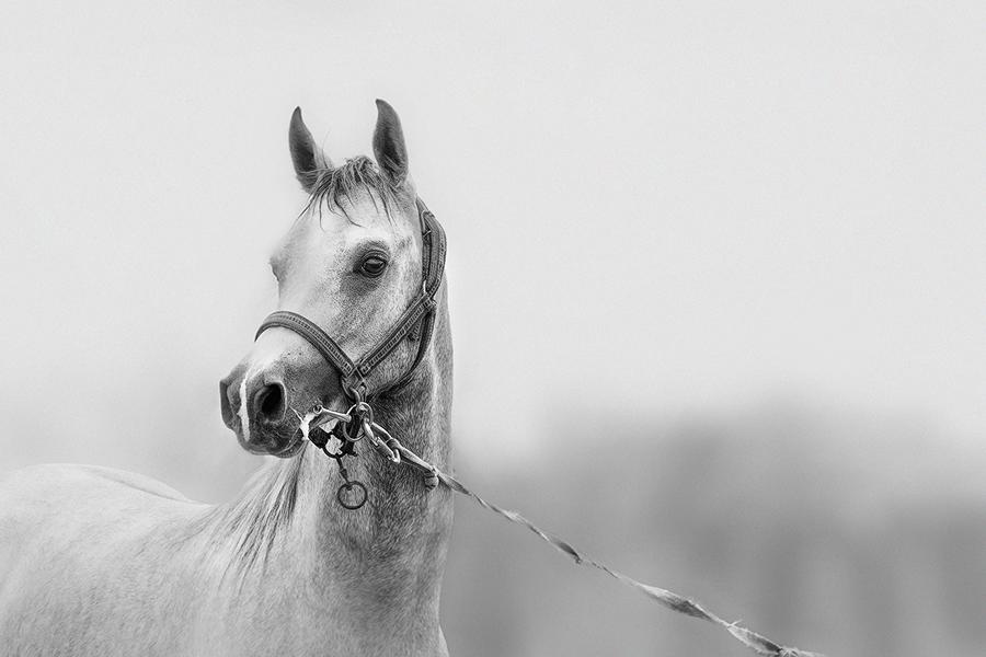 Horse,,, by amai911