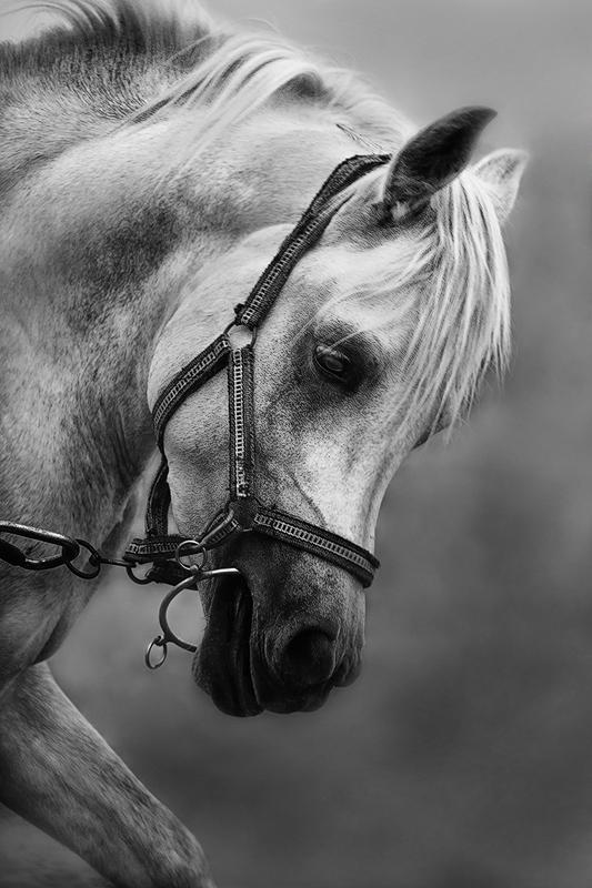 Arabian Horse by amai911 on DeviantArt