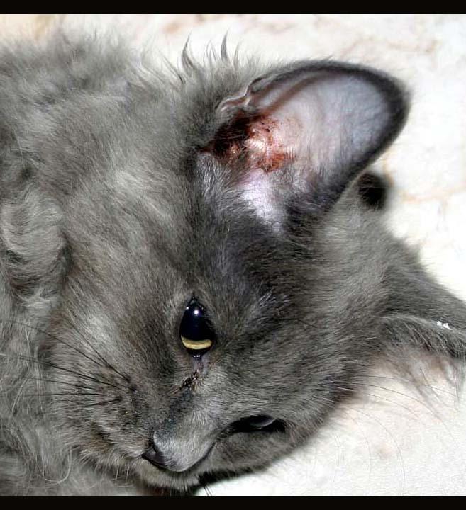 Sad Cat by amai911 on DeviantArt