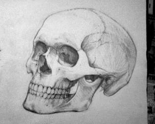 the other skull